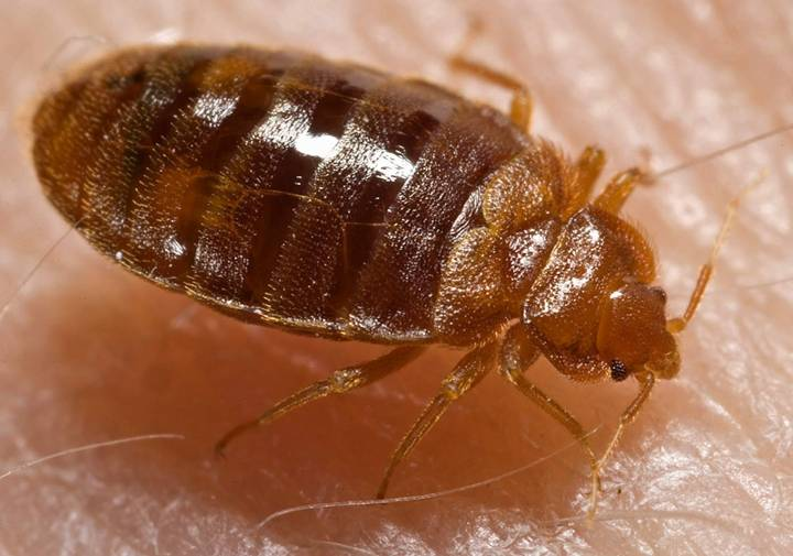 Tucson, Arizona 85701 bed bugs. Oh no... You need to get rid of this ASAP! bed bug eggs removal Tucson