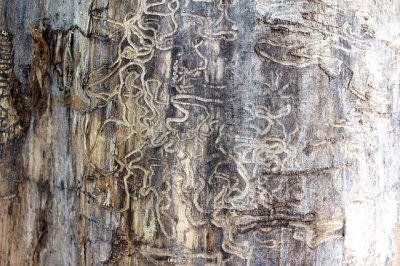 Illinois termites could cause MASSIVE damage to wooden structures and furniture